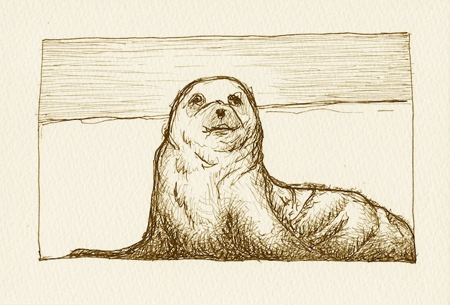 Sally the seal